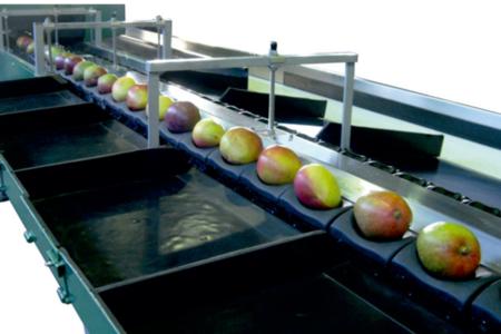 Calibrafruta 4